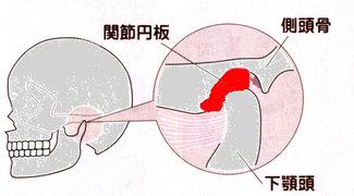 顎関節の構造
